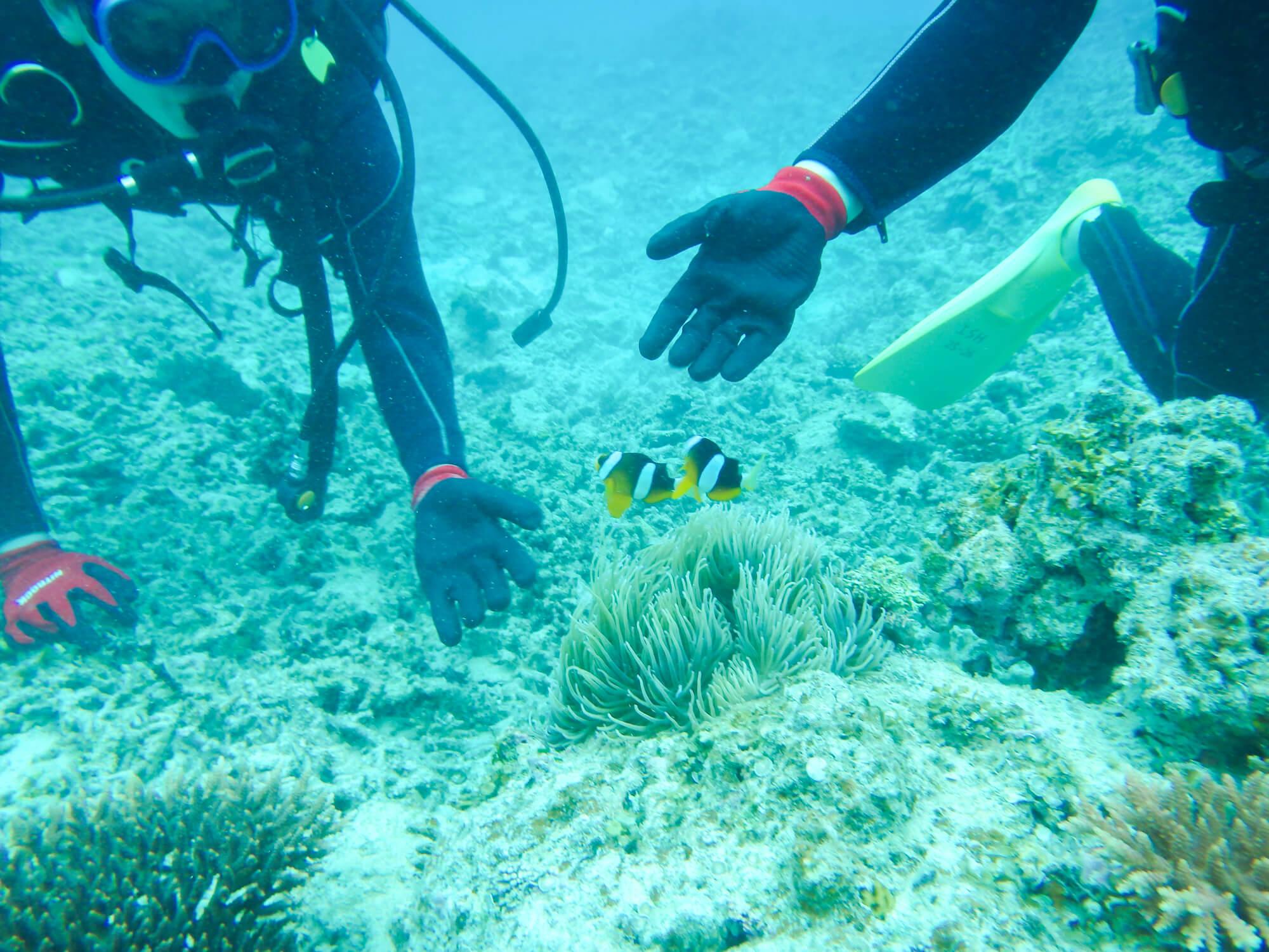 石垣島でおさかな体験ダイビング