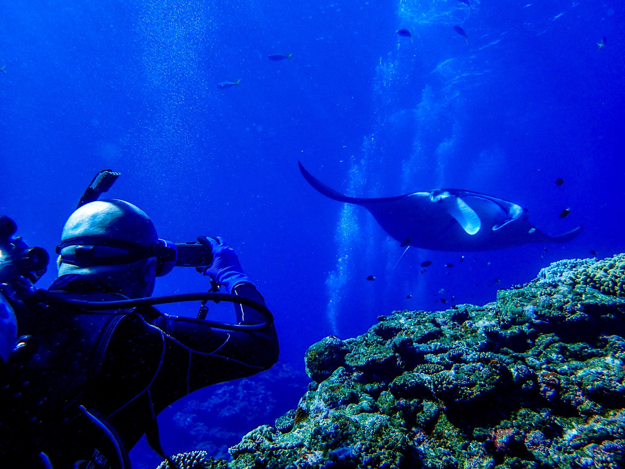石垣島でマンタとウミガメ体験ダイビング